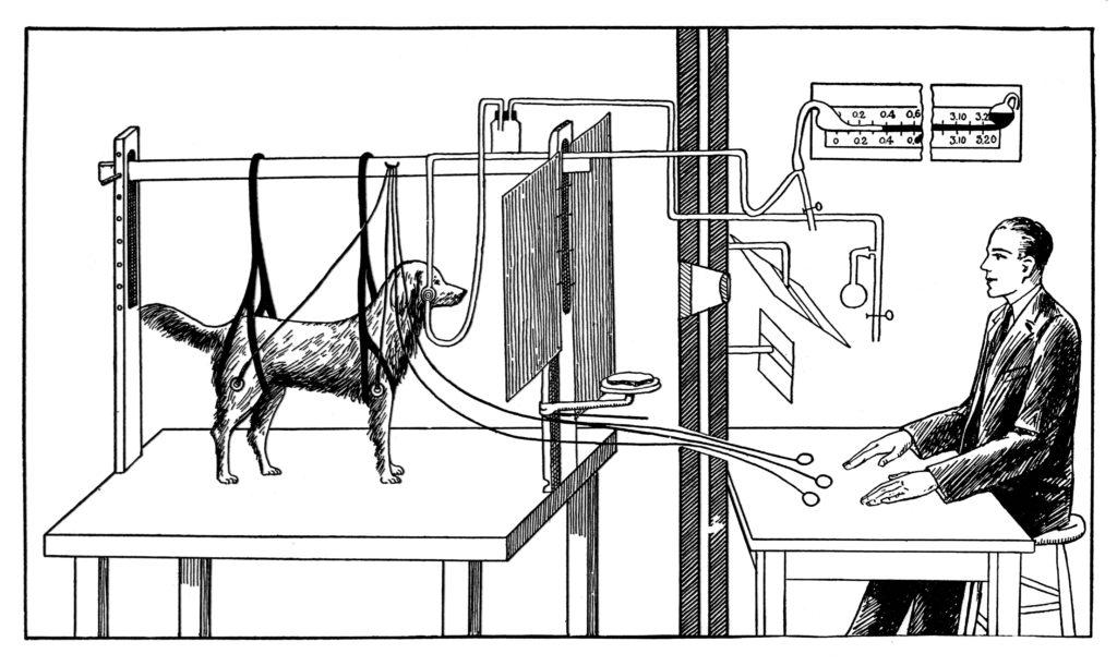 expérience de Pavlov sur le conditionnement