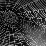 phobie araignée