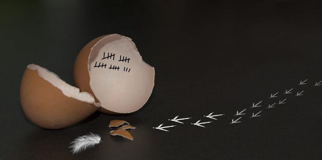 échec thérapie: un oiseau quitte sa coquille